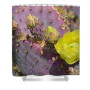 Yellow Desert Bloom Shower Curtain
