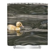 Yellow Duckling Shower Curtain
