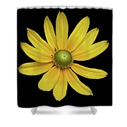 Yellow Eyed Daisy In Black Shower Curtain