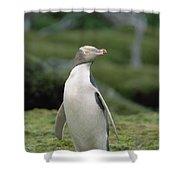 Yellow-eyed Penguin Albino Shower Curtain