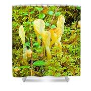 Yellow Fairy Fan Mushrooms Spathularia Flavida Shower Curtain