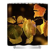 Yellow Fall Leaves Shower Curtain