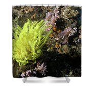 Yellow Feather Star Shower Curtain