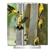 Yellow Finch Feeding Frenzy Shower Curtain