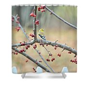 Yellow Finch In Crab Apple Tree Shower Curtain