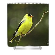 Yellow Finch Perching Shower Curtain