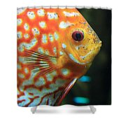 Yellow Fish Profile Shower Curtain