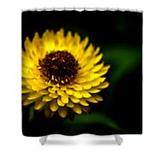 Yellow Flower 6 Shower Curtain