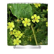 Yellow Flower And A Black Bug  Shower Curtain