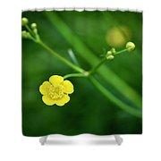 Yellow Flower Buttercup Shower Curtain