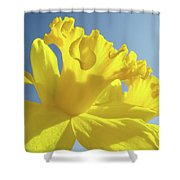 Yellow Flower Floral Daffodils Art Prints Spring Blue Sky Baslee Troutman Shower Curtain