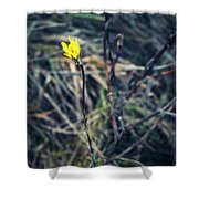 Yellow Flower In Dry Autumn Grass Shower Curtain