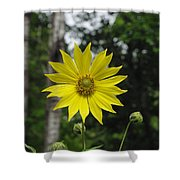 Yellow Flower In Woods Shower Curtain