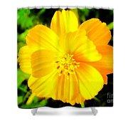 Yellow Flower On Black Background Shower Curtain