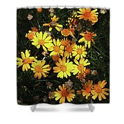 Yellow Flowers At Boyce Thompson Arboretum Shower Curtain