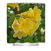 Yellow Freesias Shower Curtain