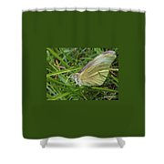 Yellow Fringed Sulphur Butterfly In Grass Blades  Image No 1  Indiana Shower Curtain