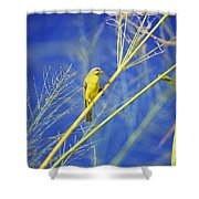 Yellow Fronted Canary Shower Curtain