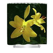 Yellow Garden Lilies Shower Curtain