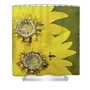 Yellow Gazanias And Bee  Shower Curtain