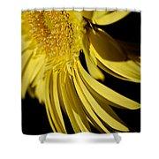 Yellow Gerbera Daisy By Kaye Menner Shower Curtain