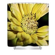 Yellow Gerbera Shower Curtain