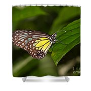 Yellow Glassy Tiger Butterfly Shower Curtain