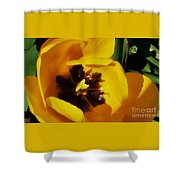 Yellow Glory From A Tulip Shower Curtain