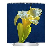 Yellow Glue Blue #f9 Shower Curtain