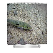 Yellow Goatfish Shower Curtain