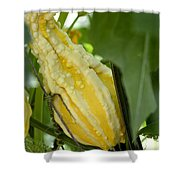 Yellow Gord Shower Curtain