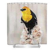 Yellow Headed Blackbird #4 Shower Curtain