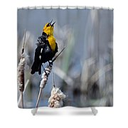 Yellow Headed Blackbird Shower Curtain