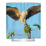 Yellow-headed Caracara Milvago Shower Curtain