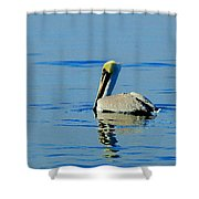 Yellow Headed Pelican Shower Curtain