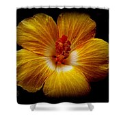 Yellow Hi Shower Curtain
