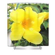 Yellow Hibiscus St Kitts Shower Curtain