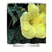 Yellow Hibiscus Watercolor Shower Curtain