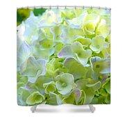 Yellow Hydrangea Flowers Art Prints Baslee Troutman Shower Curtain