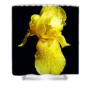 Yellow Iris After The Rain Shower Curtain