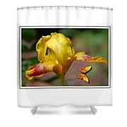 Yellow Iris And Butterfly Shower Curtain