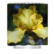 Yellow Iris Is For Passion Shower Curtain