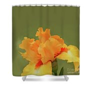 Yellow Iris Pillow Shower Curtain
