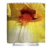 Yellow Iris Secret Shower Curtain