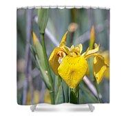 Yellow Iris Wild Flower Shower Curtain