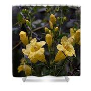 Yellow Jessamine With Raindrops Shower Curtain