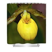 Yellow Lady's Slipper 3 Shower Curtain