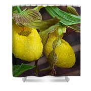 Yellow Lady's Slipper Shower Curtain