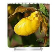 Yellow Lady's Slipper  Shower Curtain