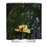 Yellow Leaf On Mossy Tree Shower Curtain